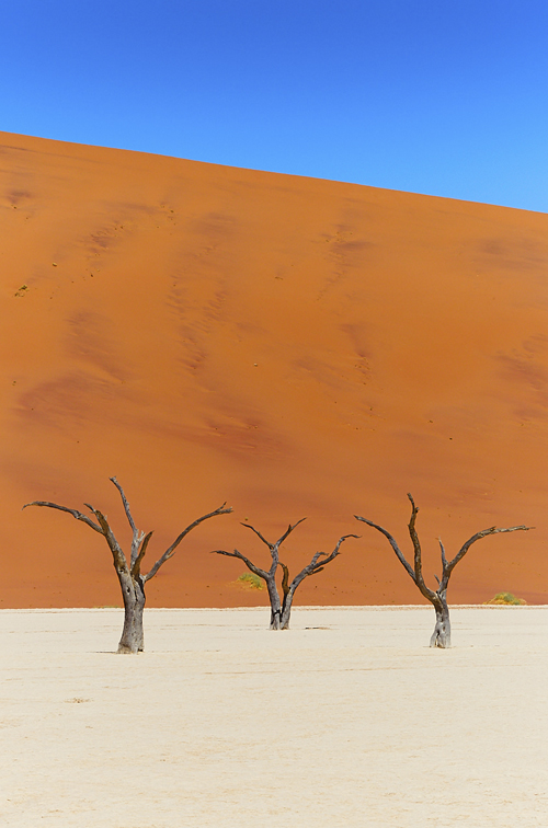 Sossu trees